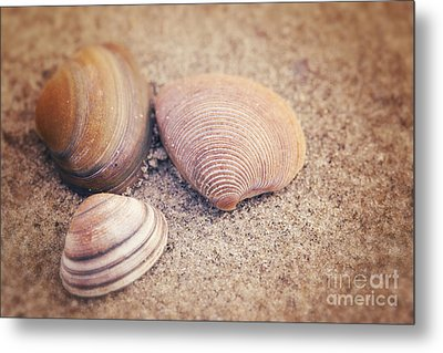 Shells  Metal Print by LHJB Photography