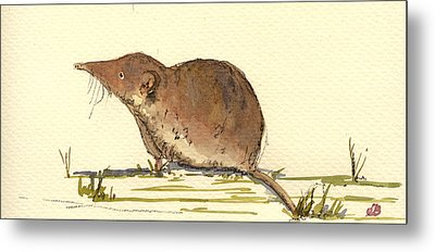 Shrew Metal Print by Juan  Bosco