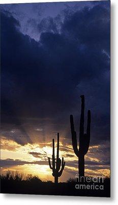 Silhouetted Saguaro Cactus Sunset At Dusk Arizona State Usa Metal Print