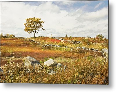 Single Tree And Rock Wall In Maine Blueberry Field Metal Print by Keith Webber Jr
