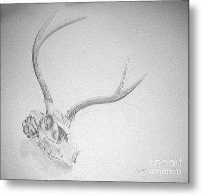 Skull Metal Print by Tamir Barkan