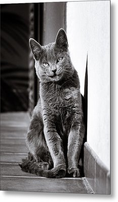 Smiling Cat Metal Print by Tetyana Kokhanets