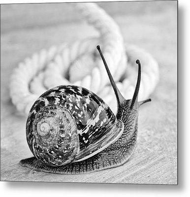 Snail Metal Print by Nailia Schwarz