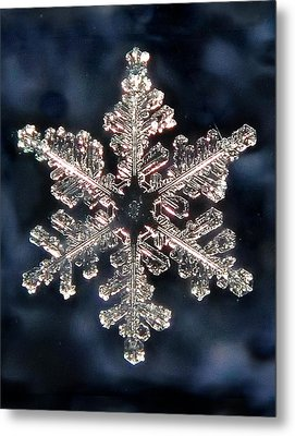 Metal Print featuring the photograph Snowflake Blue by Lorella  Schoales