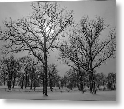 Snowy Day In January Metal Print by Samantha Morris