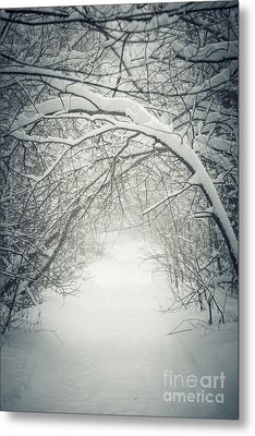 Snowy Winter Path In Forest Metal Print
