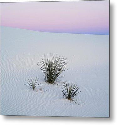 Soaptree Yucca Yucca Elata In Predawn Metal Print by Panoramic Images