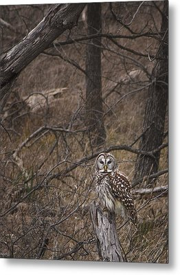Somebody's Watching Me  Metal Print by Kimberly Danner