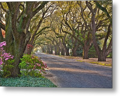 South Boundary In Spring Metal Print