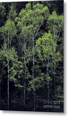 Metal Print featuring the photograph Spring Lights by Alan L Graham