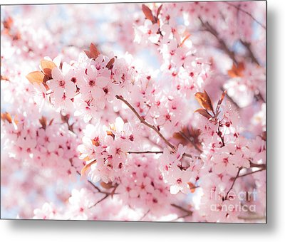 Metal Print featuring the photograph Spring by Roselynne Broussard