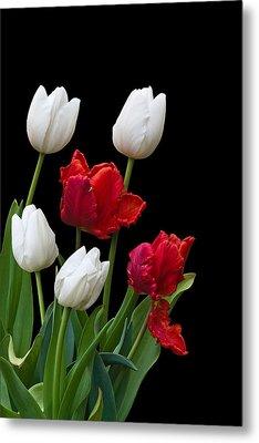 Spring Tulips Metal Print by Jane McIlroy