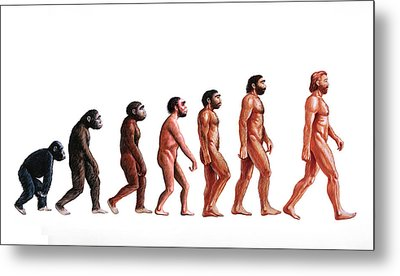 Stages In Human Evolution Metal Print by David Gifford