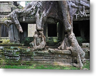 Strangler Fig Tree Roots On Preah Khan Temple Metal Print by Sami Sarkis