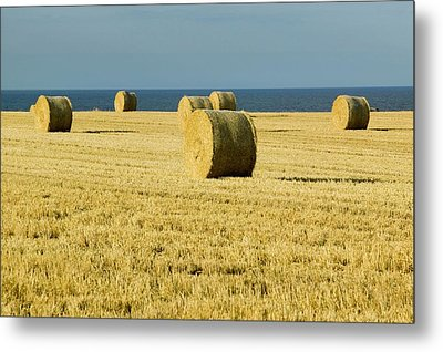 Straw Bales In A Field Metal Print by Ashley Cooper