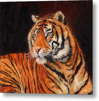 Sumatran Tiger  Metal Print by David Stribbling