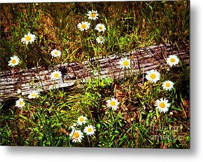 Summer Flowers On The Blue Ridge Parkway 7653 Metal Print by Dan Carmichael