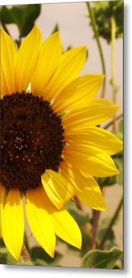 Metal Print featuring the photograph Sunflower by Diane Miller