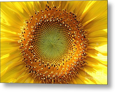 Metal Print featuring the photograph Sunflower by Lisa L Silva