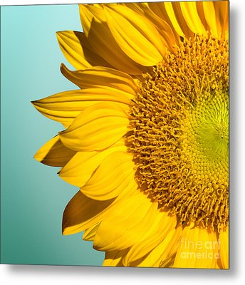 Sunflower Metal Print by Mark Ashkenazi