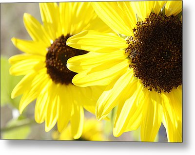 Sunflowers  Metal Print by Les Cunliffe