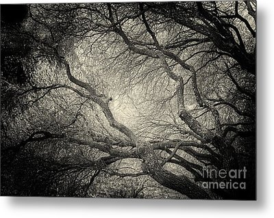 Sunlight Through Branches Of A Tree Metal Print by Nicola Fiscarelli