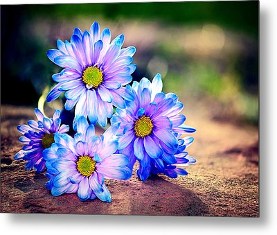 Sunset Flowers Metal Print by Tammy Smith