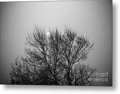 Metal Print featuring the photograph Sunset In Black And White by Mohamed Elkhamisy