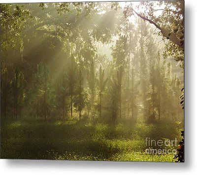 Sunshine Morning Metal Print