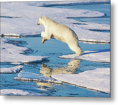 Svalbard, Norway Metal Print by Janet Muir