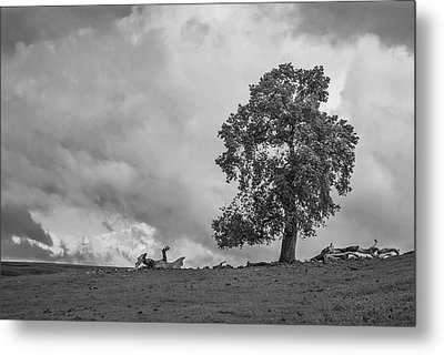 Table Mountain Oak Tree Metal Print