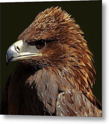 Tawny Eagle Metal Print by Paulette Thomas