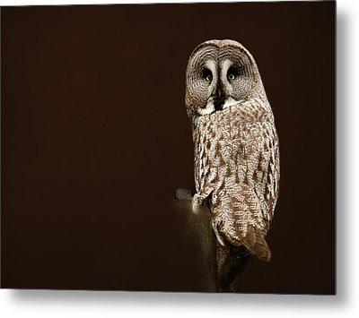 Tawny Owl Metal Print by Heike Hultsch
