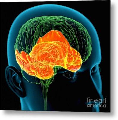 Temporal Lobes In The Brain, Artwork Metal Print