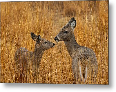 Tender Moment  Metal Print by James Marvin Phelps