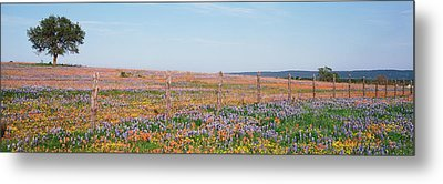 Texas Bluebonnets And Indian Metal Print by Panoramic Images