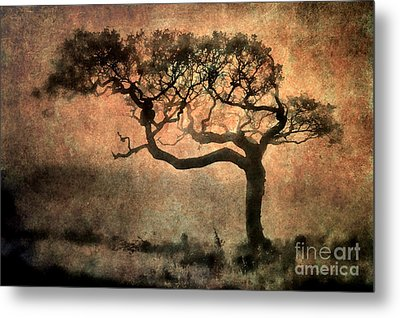 Textured Tree In The Mist Metal Print by Ray Pritchard