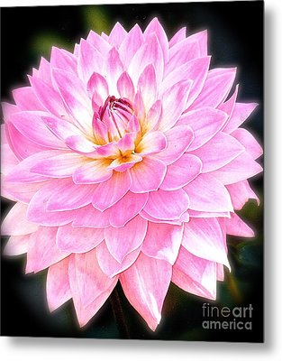 Metal Print featuring the photograph The Vivid Pink Dahlia by Margie Amberge