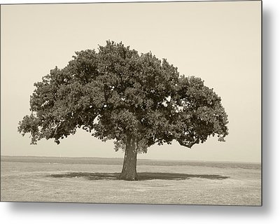 The Lonely Tree Metal Print by Charles Beeler