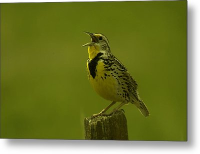 The Meadowlark Sings Metal Print