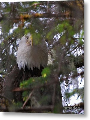 Metal Print featuring the photograph The Watcher by Cynthia Lagoudakis