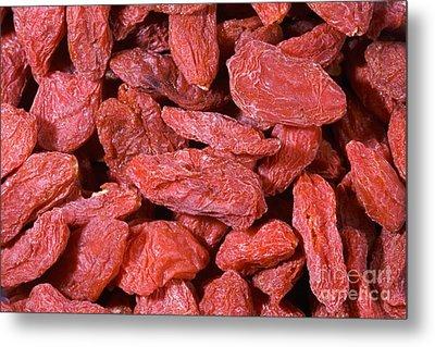 Tibetan Goji Berry Lycium Chinense Metal Print by Bob Gibbons