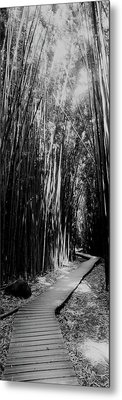 Trail In A Bamboo Forest, Hana Coast Metal Print by Panoramic Images