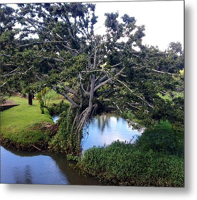 Metal Print featuring the photograph Tree by Alohi Fujimoto