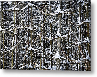Tree Trunks In Winter Metal Print