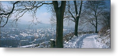 Trees Along A Snow Covered Road Metal Print