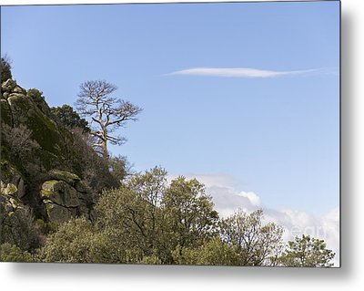Trees In The Mountains Metal Print