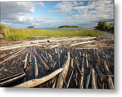 Trees On The Shores Of Lake Athabasca Metal Print