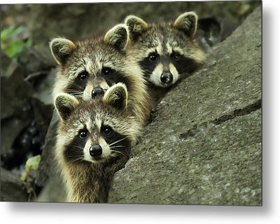Tres Banditos Metal Print by Mircea Costina