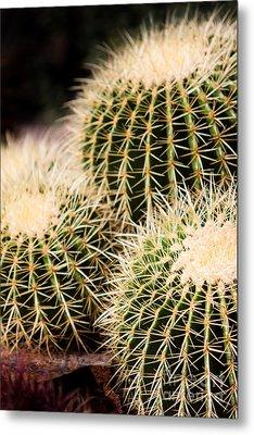 Triple Cactus Metal Print